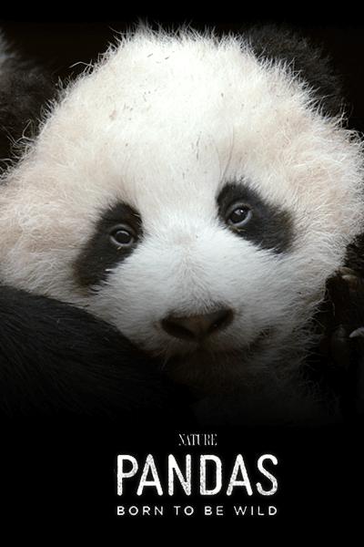NATURE: Pandas: Born to be Wild