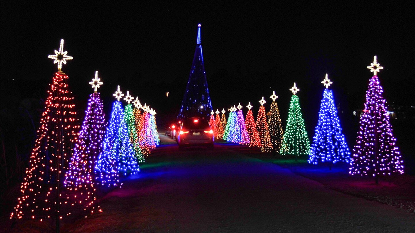 Two rows of colorfully lit Christmas trees at Hikari – A Festival of Lights at Tanaka Farms. | Sandi Hemmerlein