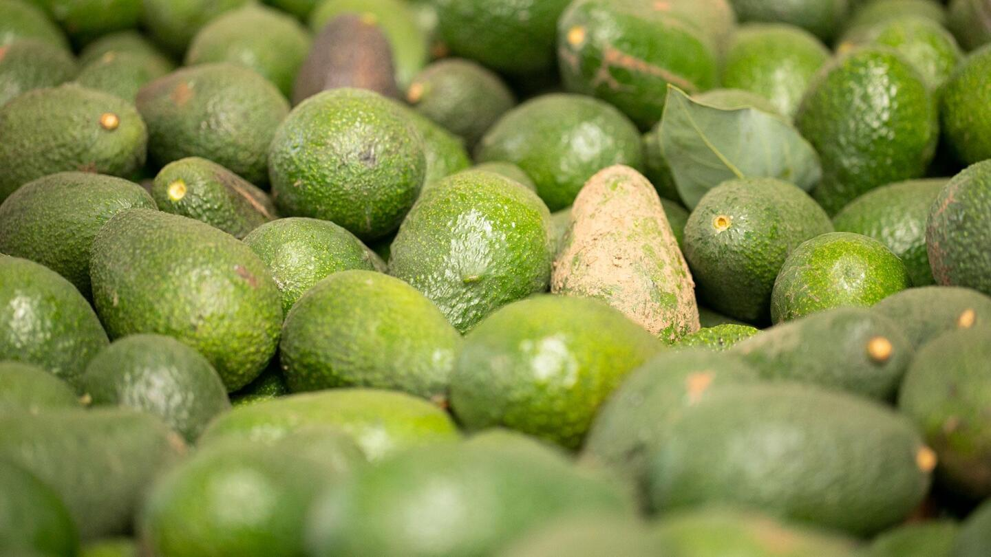 A picture of a pile of avocados.