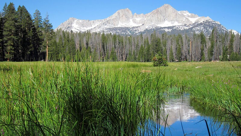 meadow-sierra-10-12-16.jpg