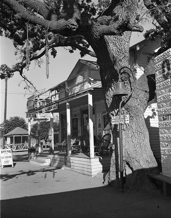 """The """"Hanging Tree"""" in Calabasas, Los Angeles County, 1939. 