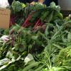 Veggies from Her Farms from the Santa Barbara Farmers Market