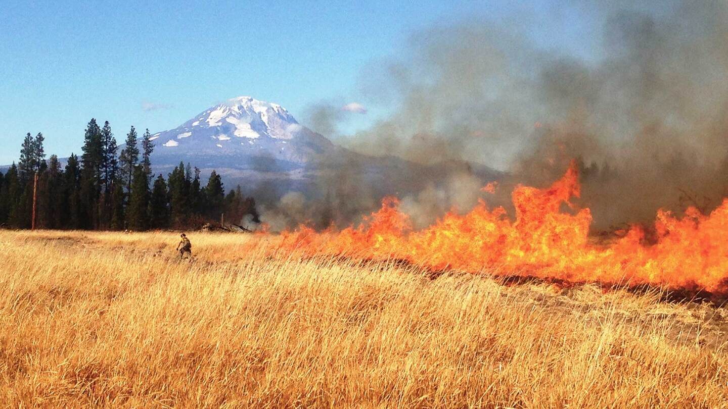 firefighter lighting the final edige of a prescribed fire in Washington