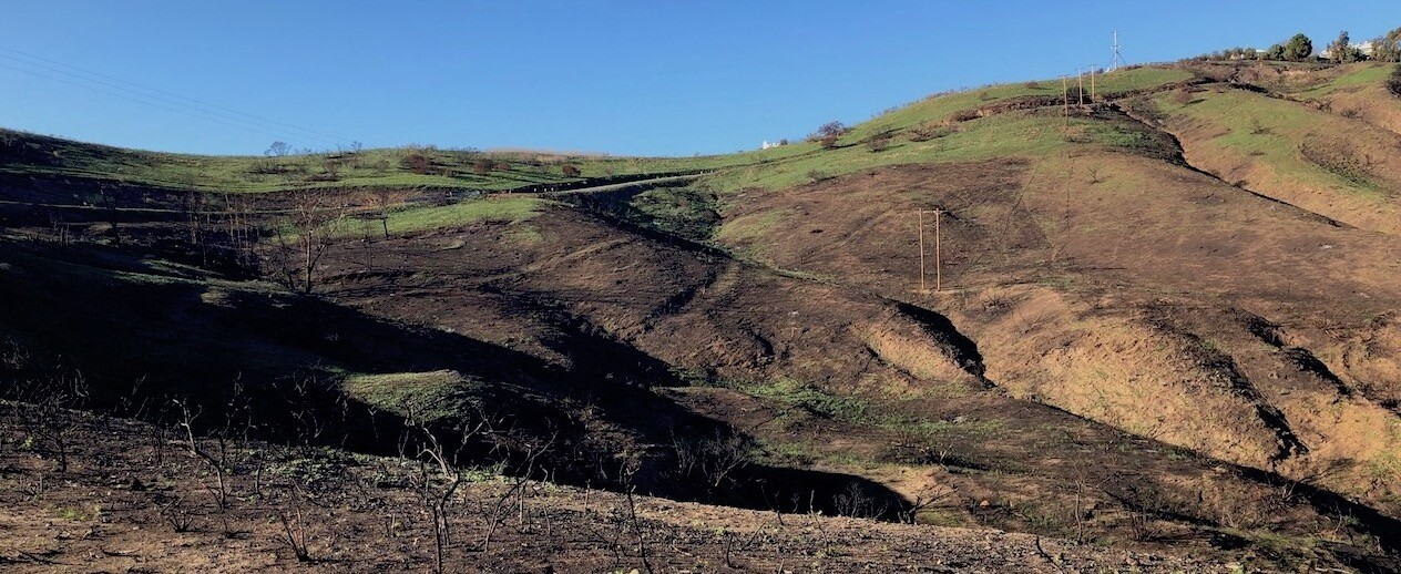 Mostly scorched hills with green grass growing on top in Malibu Canyon, two months after Woolsey Fire