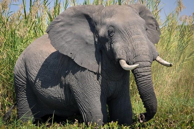ivory-ban-advances-5-29-15-thumb-630x418-93262
