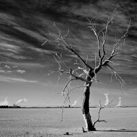 """Dead Tree, Nests & Thermal Plants,"" infrared exposure. Salton Sea, CA. 2014. 