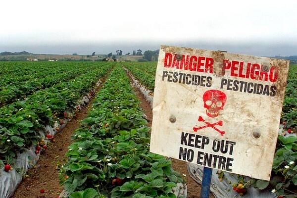 pesticidestrawberries