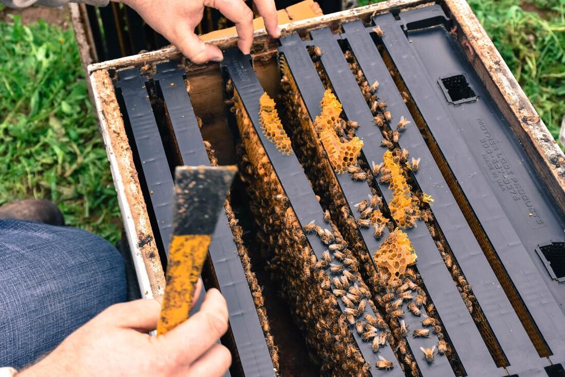 Valley Hive
