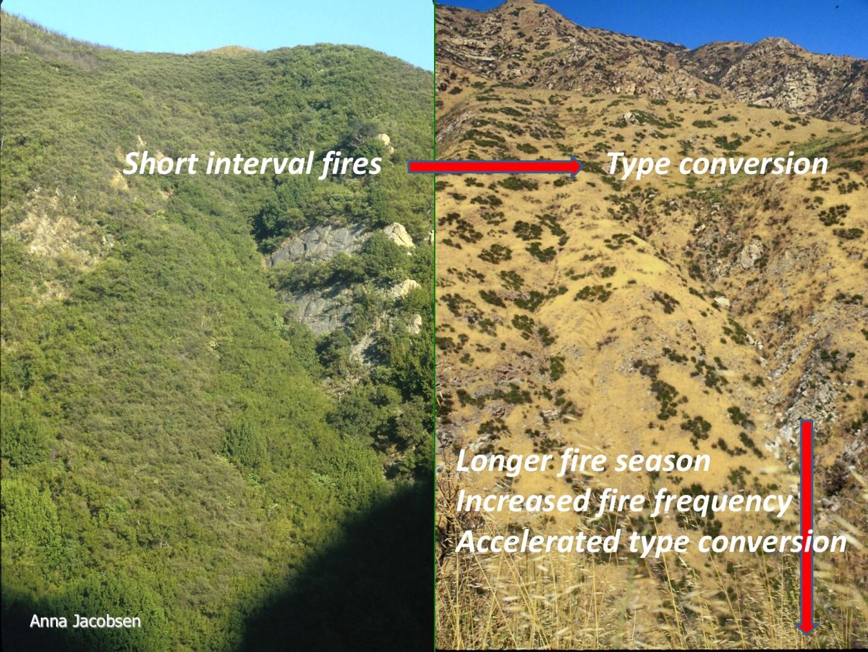 Map of Malibu Canyon Grassy Hills Type Conversion Comparison