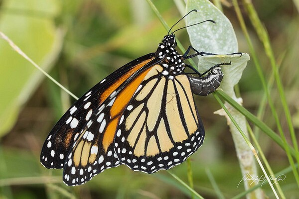 monarch-roundup-NRDC-suit-2-25-14-thumb-600x400-69375