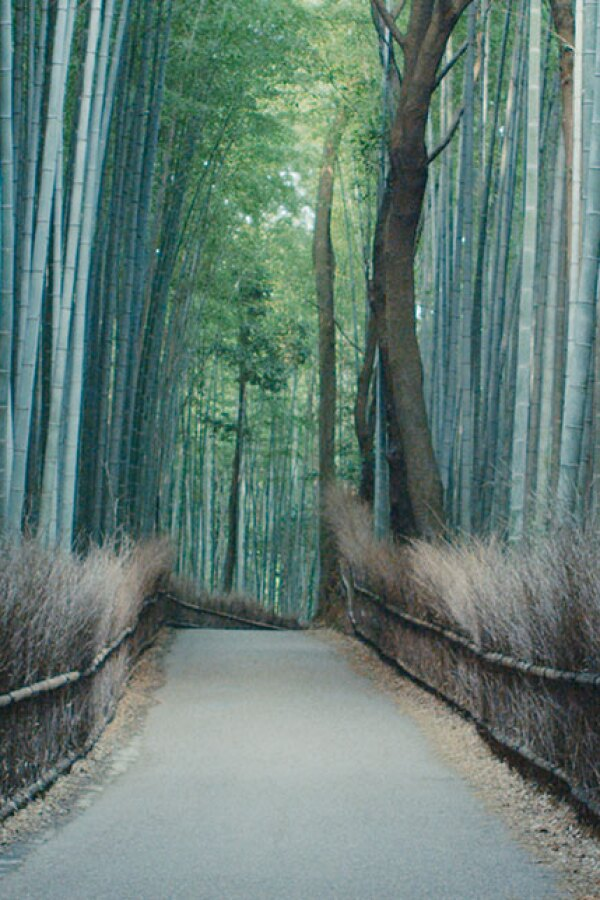 Bamboo forest in Kyoto. | Still © Planetary Collective