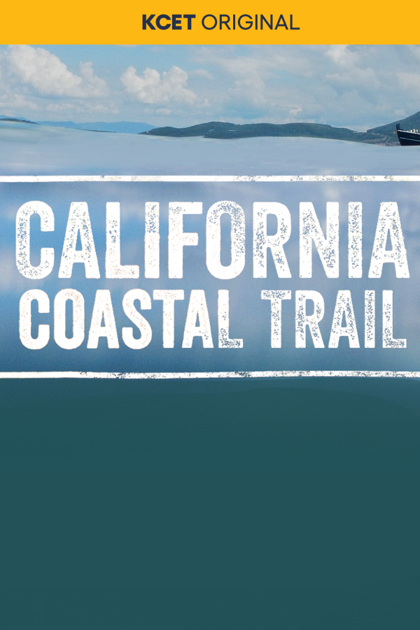 California Coastal Teail