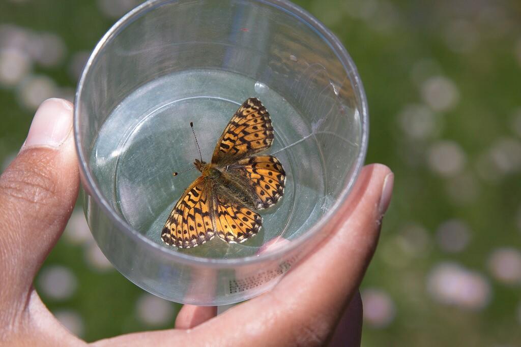 cit-sci-butterfly-4-17-16.jpg