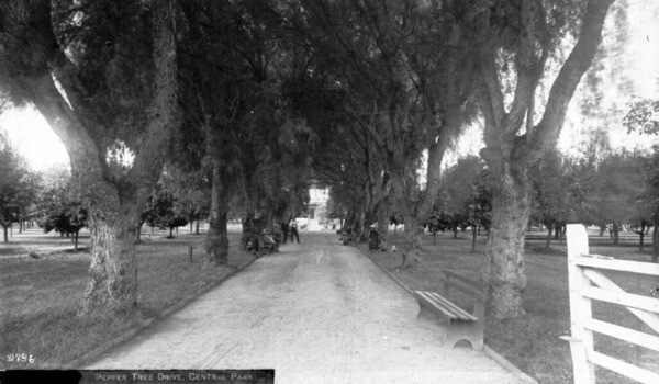 This avenue of pepper trees was one of Central Park's charms. Circa 1890 photograph courtesy of the USC Libraries - California Historical Society Collection.