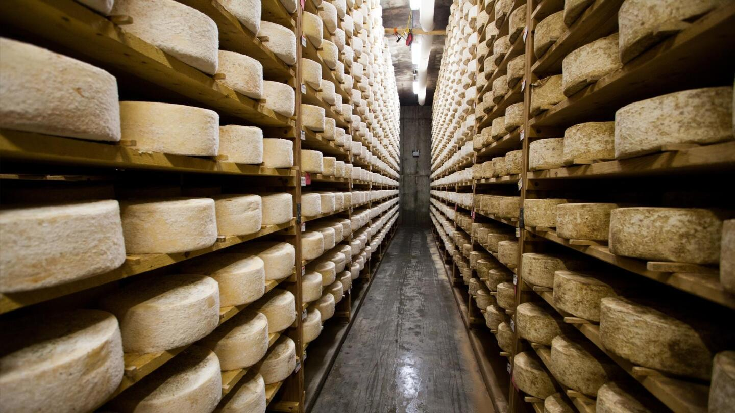 Many rows of cheese wheels line an aisle.