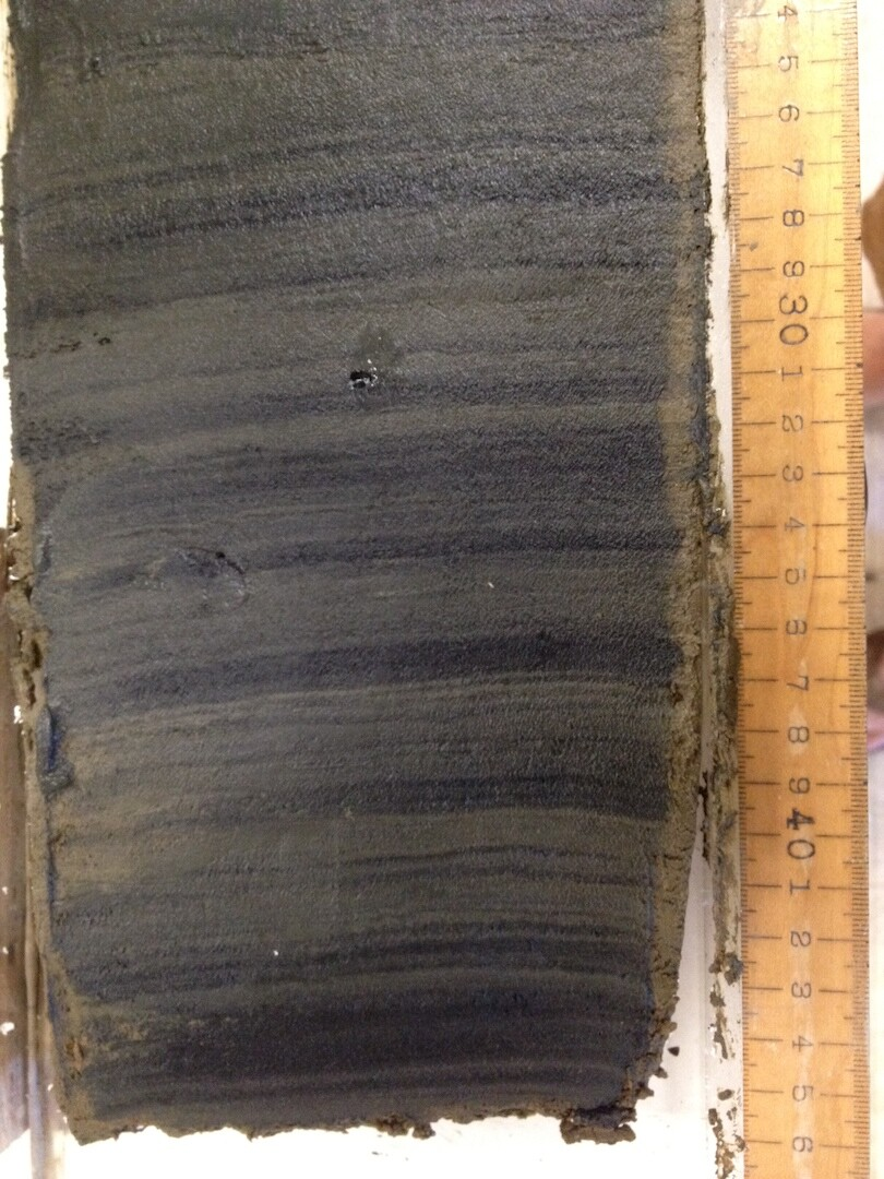 Sample of sediment used in study just after it was cut open from a box core