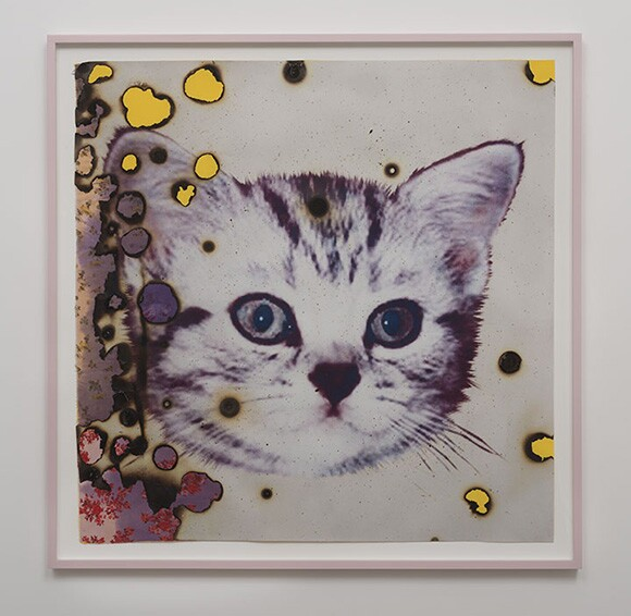 I ♥ Kitties, 2014, hand-embellished digital pigment print with fabric collage<br /> 48.5 x 48.5 inches framed | Courtesy Luis De Jesus Los Angeles
