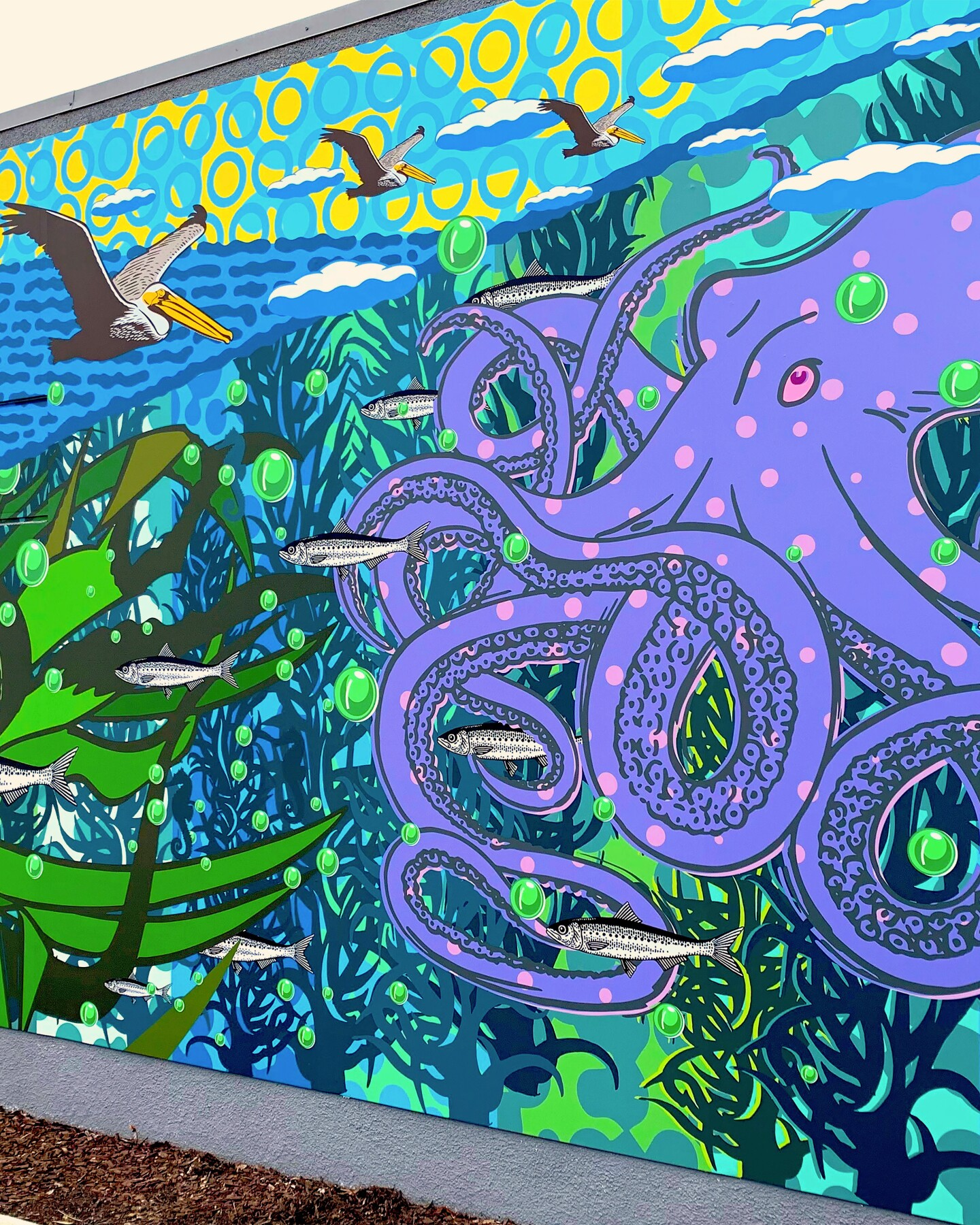A colorful mural showing purple octopus, kelp, pelicans and fish.