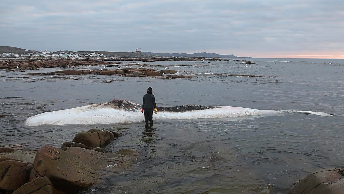 """On a walk in Newfoundland, artist Patty Chang found a dead sperm whale washed up on the shore and decided to wash it as a form of purifying the body to prepare it for the next stage. The scene became part of her 2016 work, """"Invocation of a Wandering Lake."""