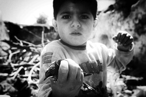 Look! Can You Help This Bird? Idlib 2013