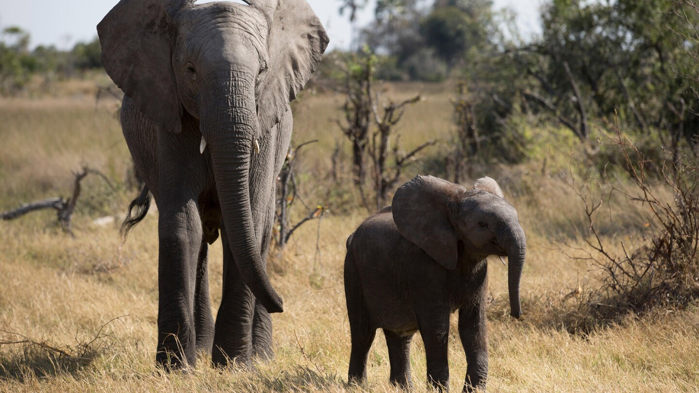 """An adult elephant and a baby elephant named Naledi stand near each other. 