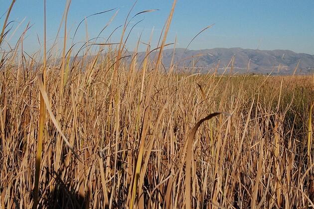 cordgrass-6-26-15-thumb-630x419-94687