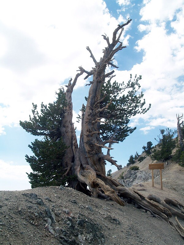 Wally Waldron Tree