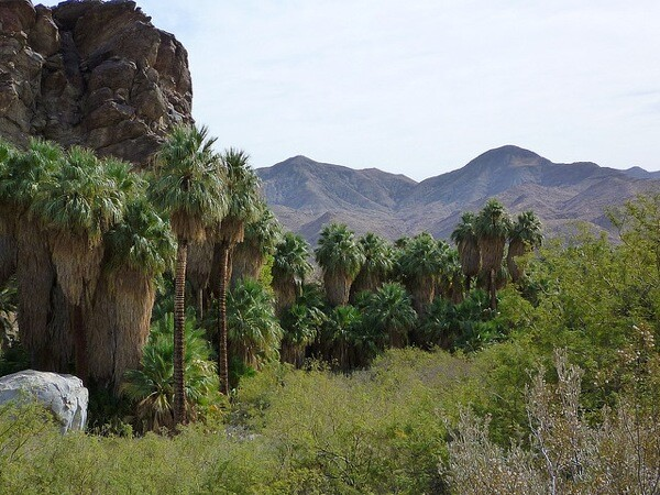 A view from within Andreas Canyon, one of the canyons in Indian Canyons.