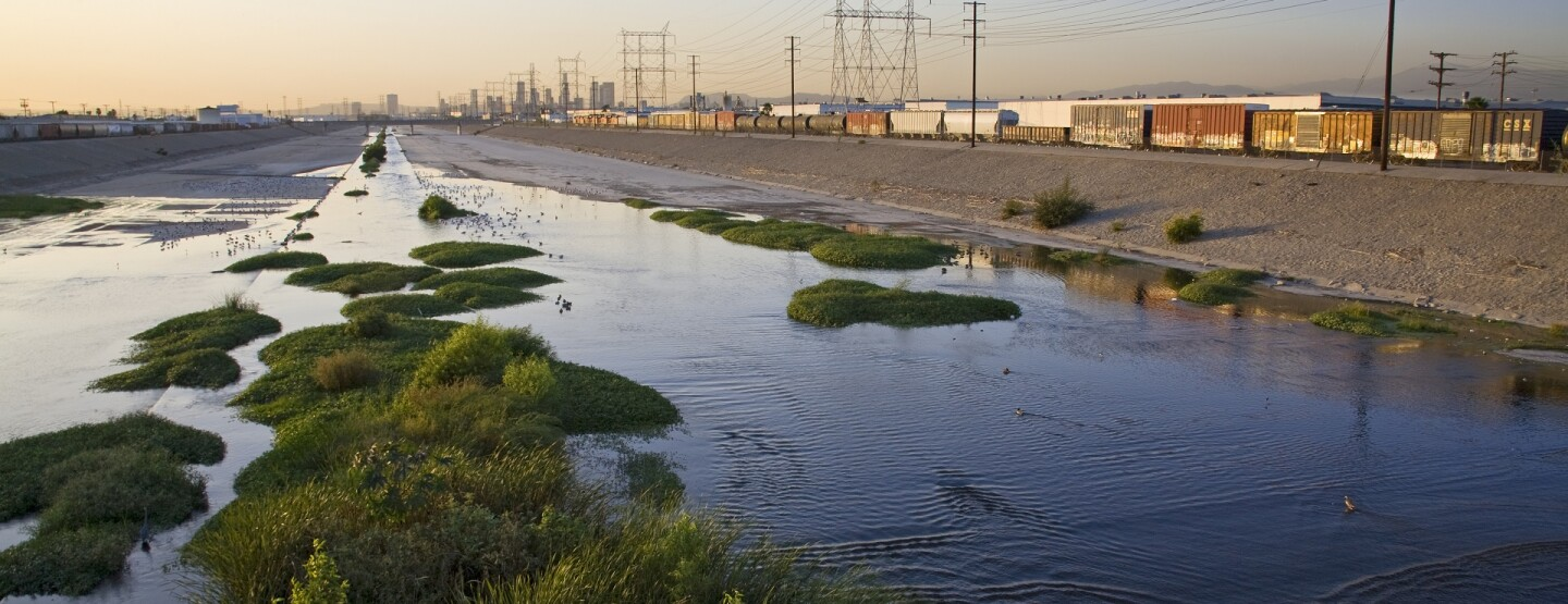 Los Angeles River with waterfowl