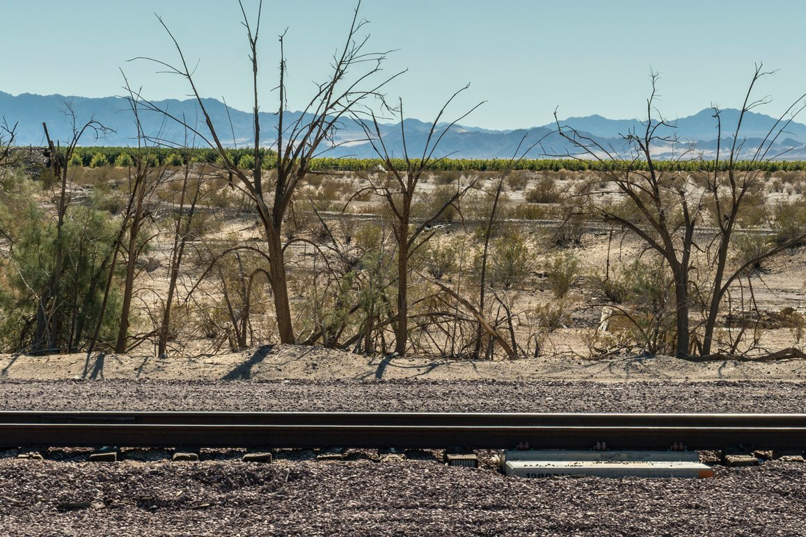 View of Cadiz Inc's agricultural project viewed from the BNSF Freight line tracks. | Kim Stringfellow