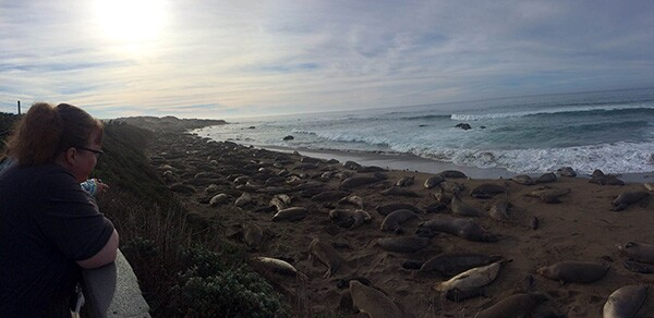 A visitor to Piedra Blancas checks out the elephant seals. | Photo: Zach Behrens