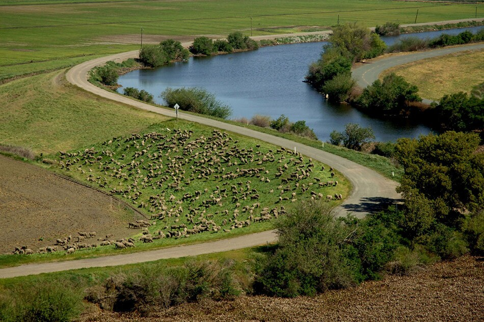 Channel with Road and Lower-Elevation Land, Sheep