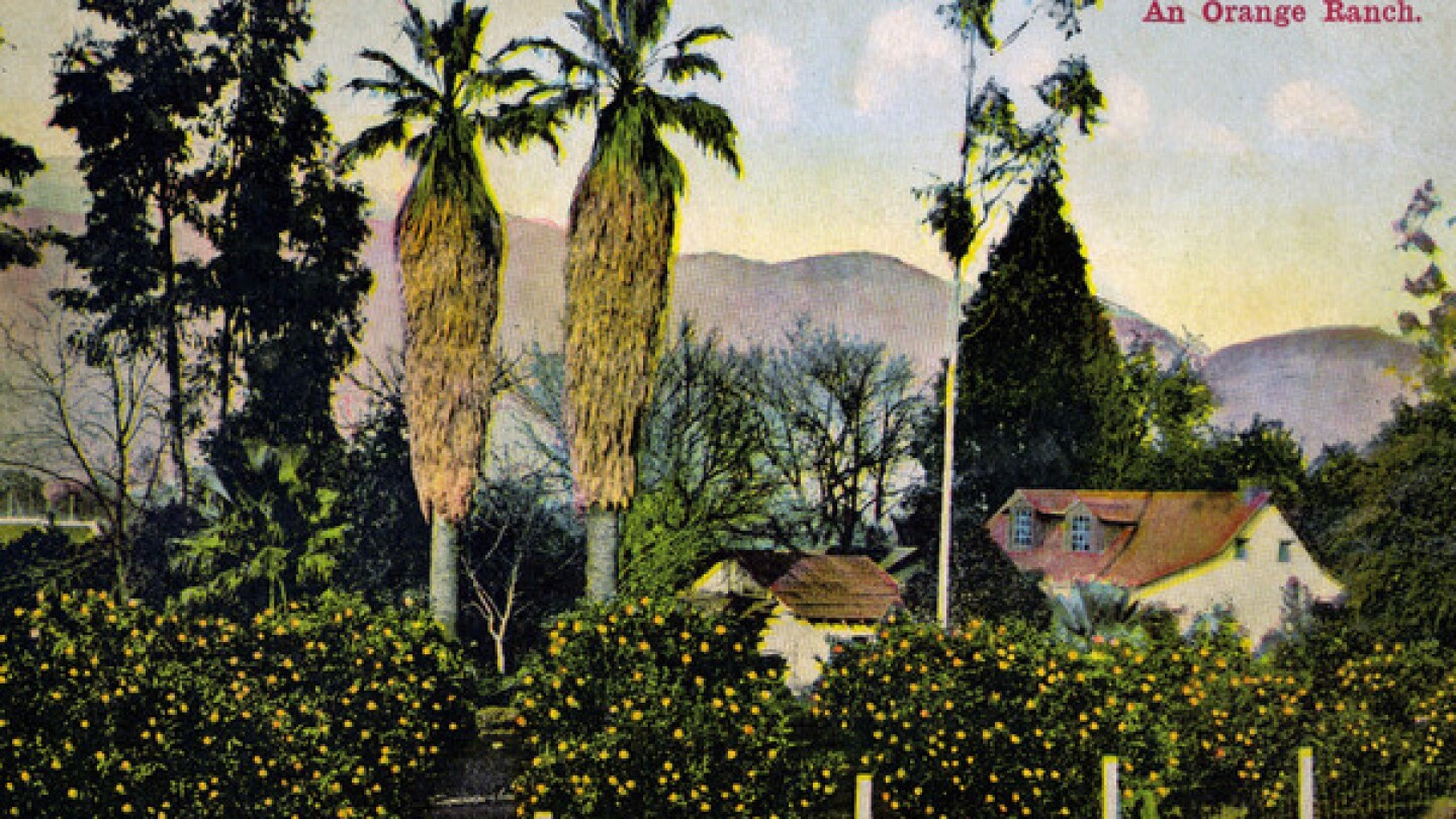 This postcard manages to include three of the four tree types covered in Jared Farmer's book, 'Trees in Paradise': eucalypts, oranges, and palms. Courtesy of Jared Farmer.