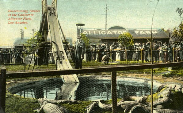 1911 postcard from the California Alligator Farm in Lincoln Heights. Courtesy of the Los Angeles Public Library Photograph Collection.