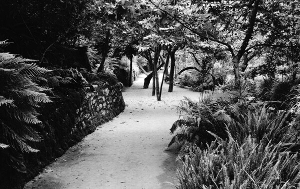 1910 view of Fern Dell in Griffith Park. Courtesy of the Title Insurance and Trust / C.C. Pierce Photography Collection, USC Libraries.