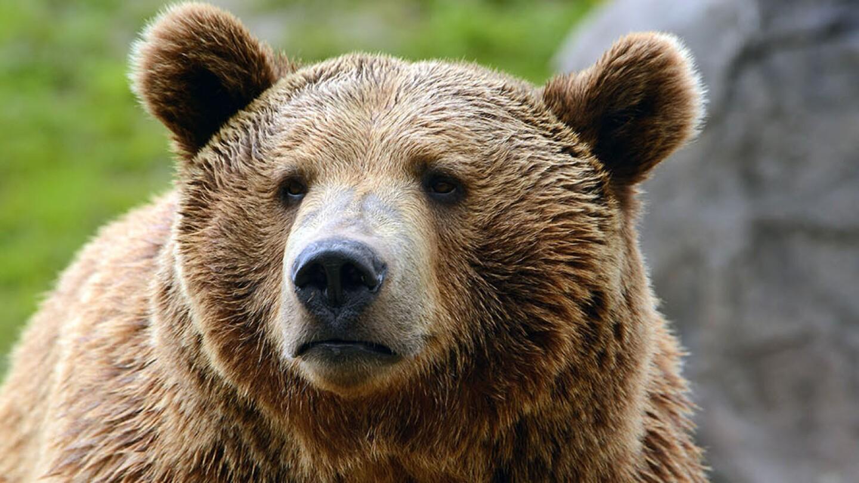 A bear looks on.