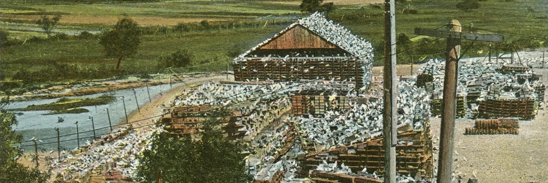 Pigeon Farm (header)