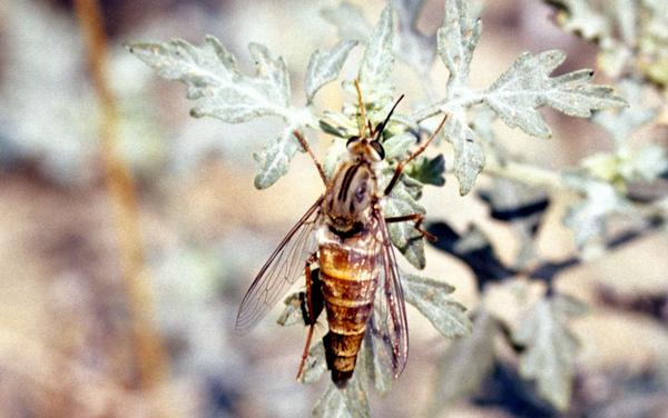delhisandsfly