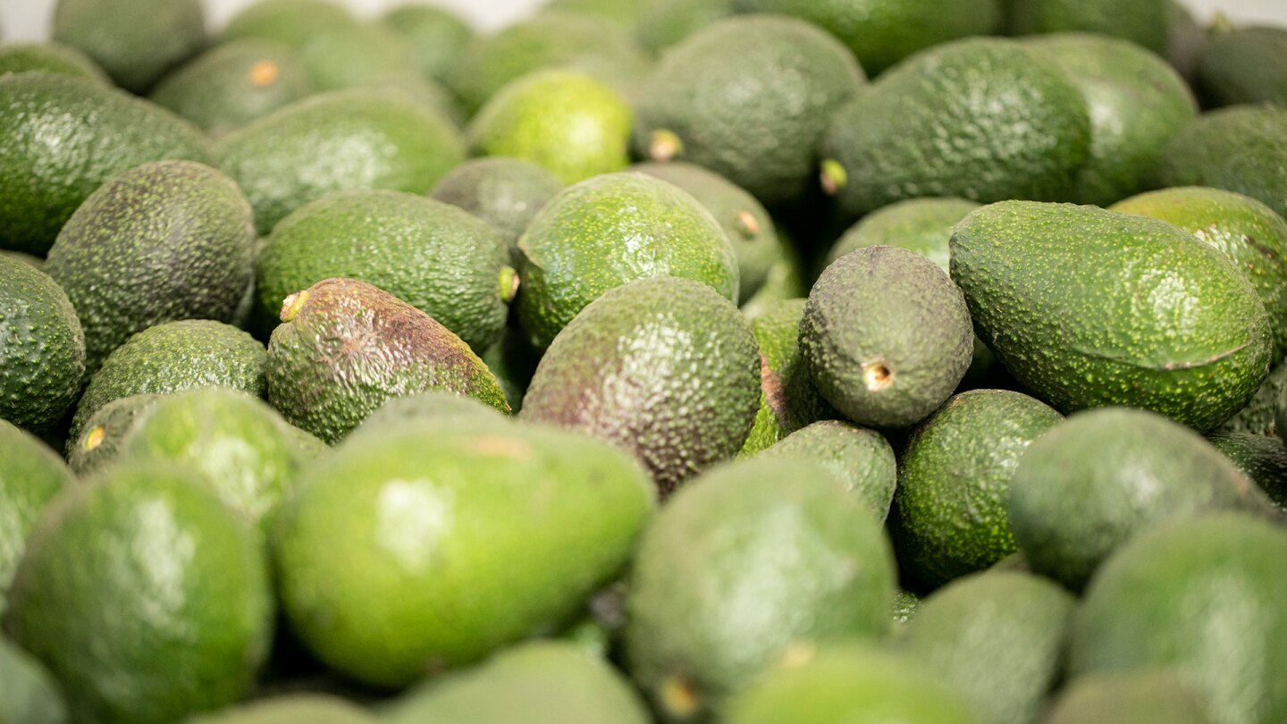 Avocados from Chile | Nicky Milne/Thomson Reuters Foundation