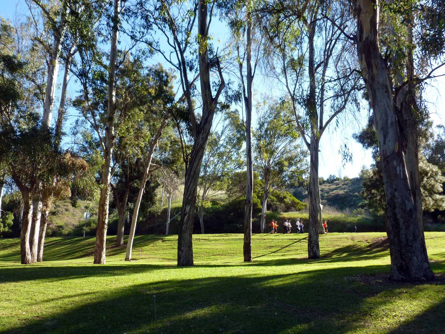 Many trees at the Chavez Ravine Arboretum have been there since the 1920s. | Sandi Hemmerlein