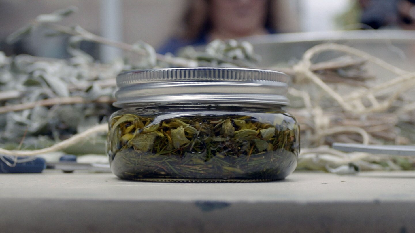 """A jar of clippings from medicinal plants mixed with olive oil. 