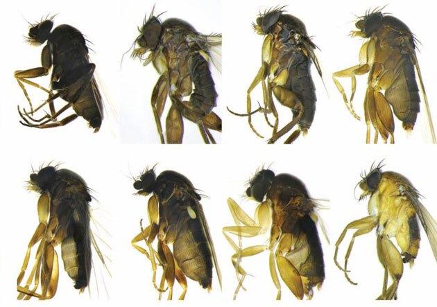 30-new-species-3-26-15-thumb-630x443-90130