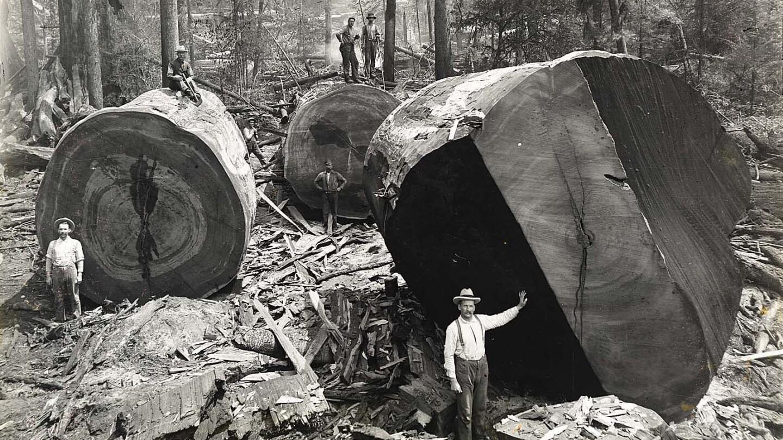 Redwood logging in Vance Woods