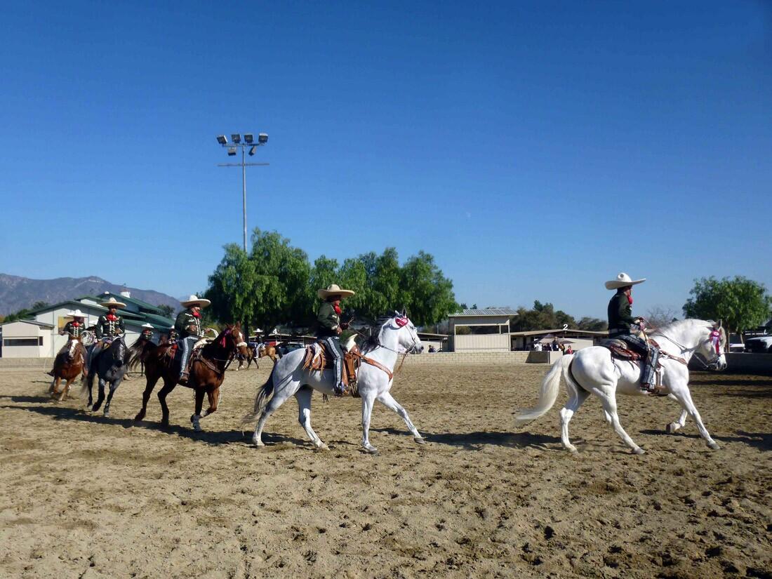 Equestfest (2)