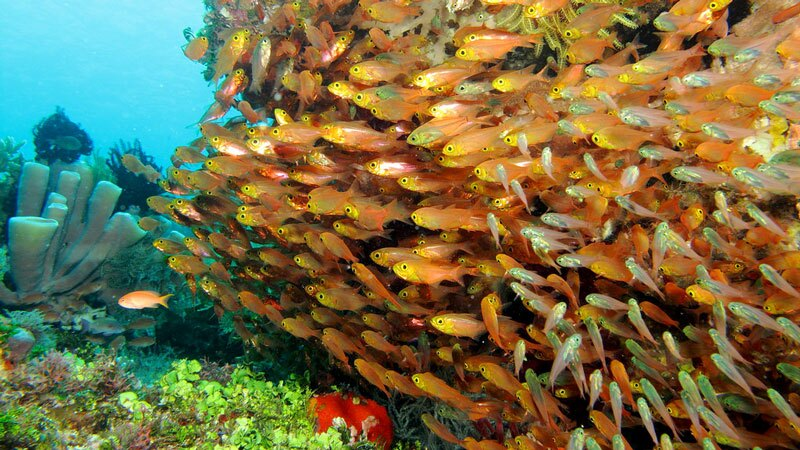 Reef fish near Alor, Indonesia | Photo: Choh Wah Ye, some rights reserved