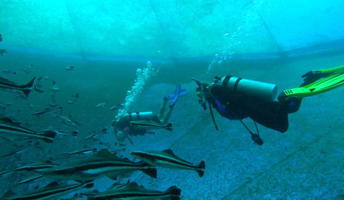 Swimmers inside an open-ocean fish farm.   Earth Focus