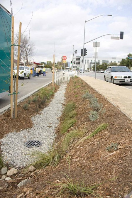 A clue to the median's infiltration features. Over the next months, the median will become greener as the native plants mature