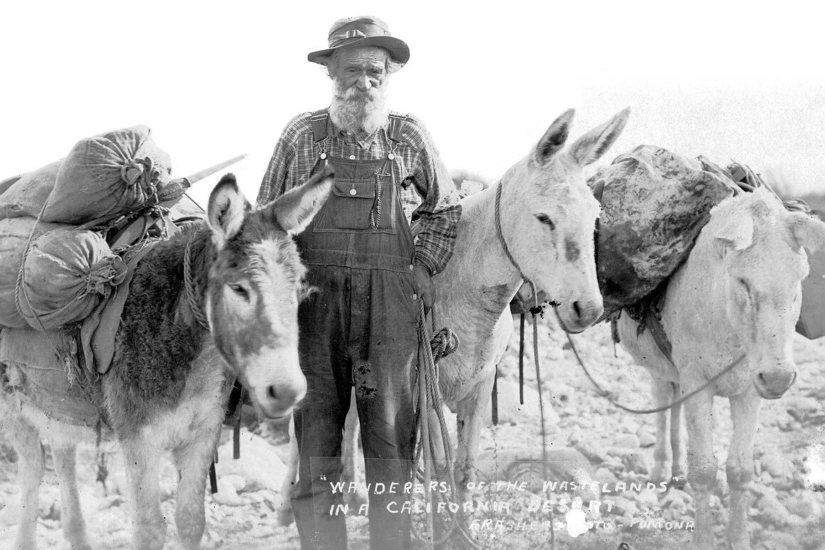 """Wanderers of the Wastelands"" vintage postcard of an unknown prospector and his burros. 