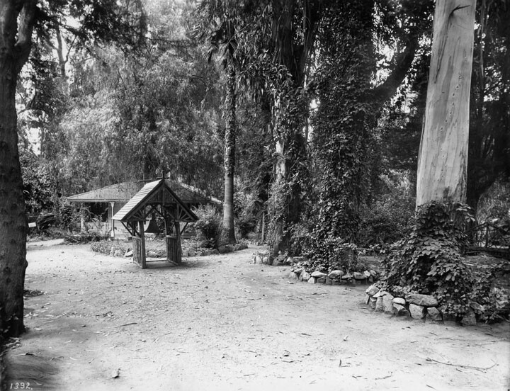Another view of Wolfskill's eucalyptus trees. Courtesy of the Photo Collection, Los Angeles Public Library.