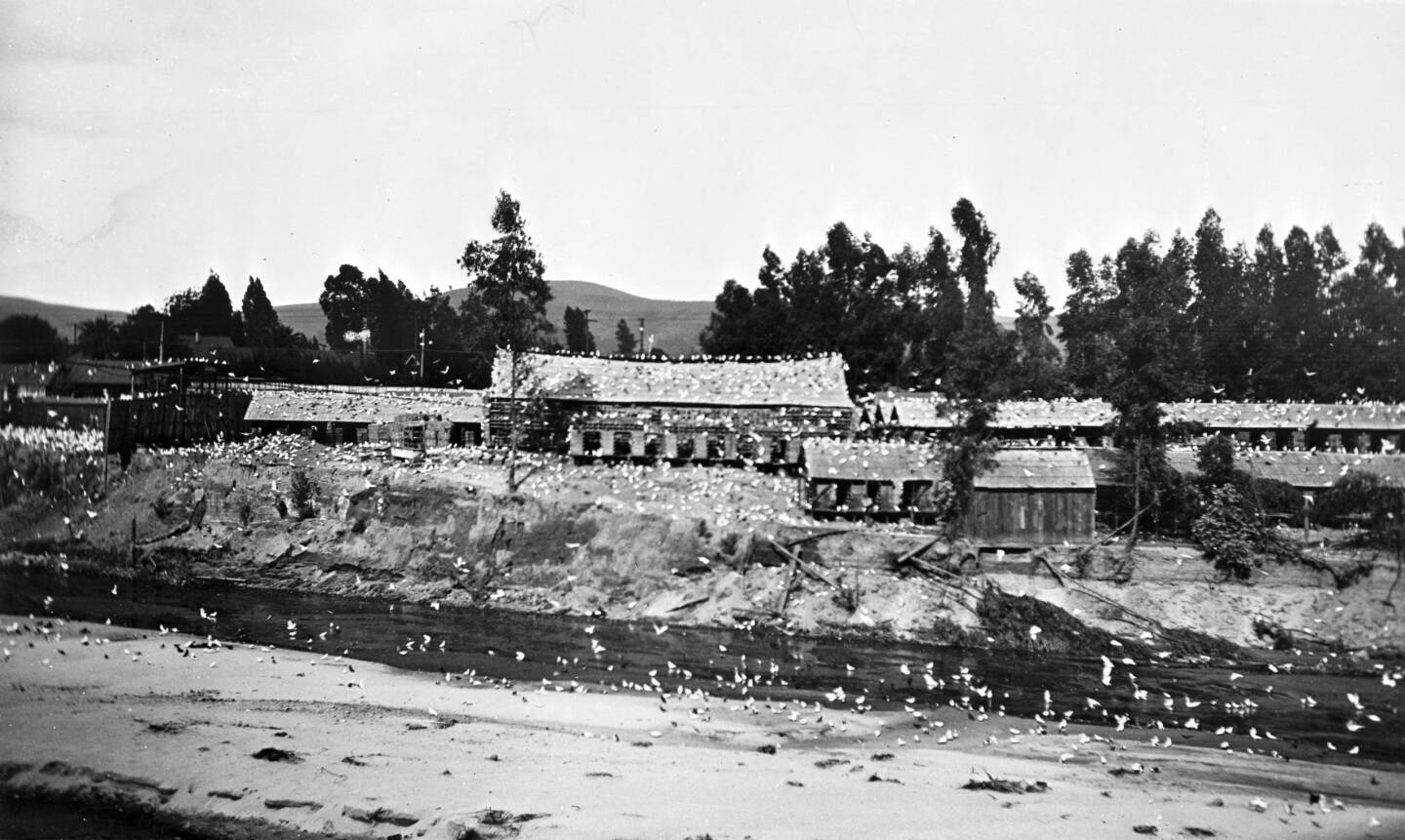 Another view of the pigeon ranch from across the river, ca. 1905. Courtesy of the Photo Collection, Los Angeles Public Library.